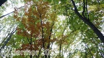 (c) darmor 2013