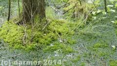 wiosna_14_021