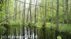 wiosna_14_025