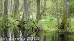 wiosna_14_026