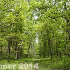 wiosna_14_044