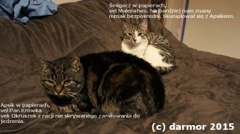 Okruszek i Maleństwo w trakcie lenistwa na łóżku człowieków.