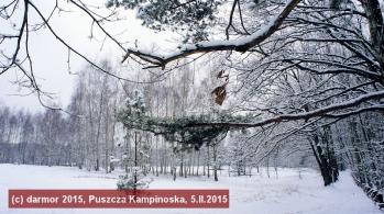 Puszcza Kampinoska