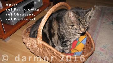 Apsik - kot pełen powagi, ale i swoistej kociej radości.