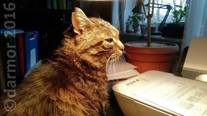 Apsik kontrolnie podpatruję co ja piszę i niby nie zwraca na mnie uwagi...