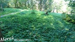 helsinki_2017_029