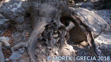 wawóz Samaria - Grecja - Kreta